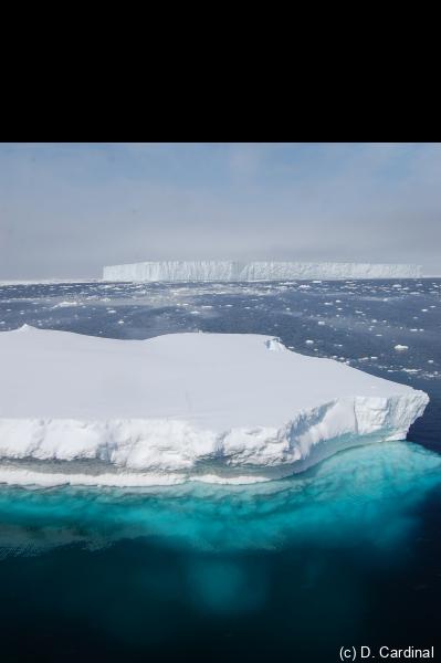 DSC_1750 iceberg