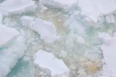 DSC_1787 ice algea