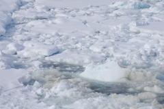 DSC_1834 ice algea