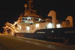 DSC_5586 pelagia